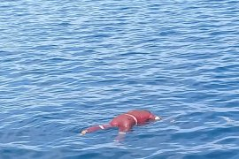 Satu korban kapal tenggelam di perairan Pulau Taliabu ditemukan