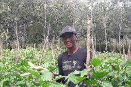 Edi Susapto, pelopor pengembangan pertanian organik
