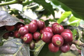 Kementerian Pertanian sertifikasi produk petani organik