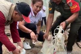 Waduh, ada limbah medis terapung di Sungai Ciliwung