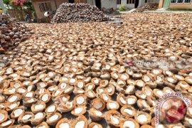 Harga kopra di Manado bertahan Rp5.100/kg