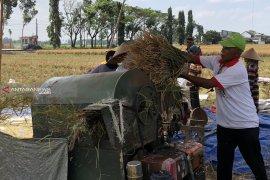 Musim kemarau, petani Kabupaten Malang mulai panen