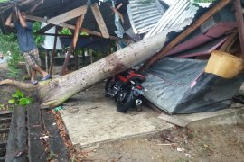 Empat rumah warga rusak akibat hujan badai di Bireuen