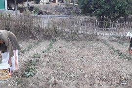 Kekeringan landa ratusan hektare lahan pertanian di selatan Sukabumi
