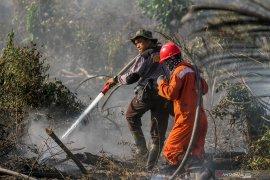 Polda Riau tangkap pembakar lahan gambut untuk kebun cabai