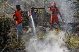 Manggala Agni berupaya padamkan kebakaran lahan gambut di Kampar