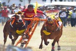 Bangkalan gelar karapan sapi Piala Presiden 2019