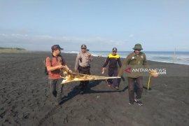 BBKSDA Jatim teliti jenis paus terdampar di Pantai Bambang Lumajang