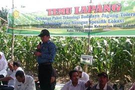 BPTP Jambi dorong penerapan  teknologi dalam berusaha tani jagung