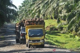 Gapki: Ekspor sawit naik pada Mei, tapi masih di bawah ekspektasi