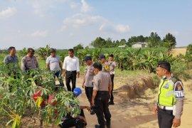Kronologi bentrokan di Mesuji, warga saling serang perkara tanah setengah hektare