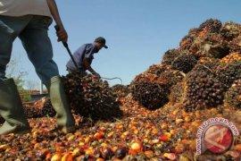 Pengelolaan sawit ramah lingkungan di Aceh