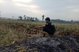 BPBD Cianjur: 76 desa di 13 kecamatan mengalami kekeringan