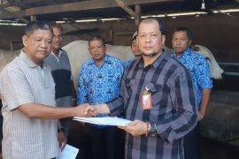 Jokowi beli sapi kurban seberat 1.020 kilogram dari peternak Langkat