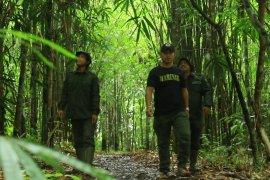 Hutan Desa Rio Kemunyang, penjaga sembilan mata air