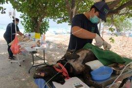 Pemandulan anjing liar penular rabies
