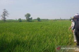 Purwakarta akan manfaatkan lahan bekas galian C jadi sumber air