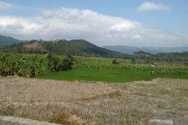 Ada 11 ribu hektare sawah Karawang kekurangan air