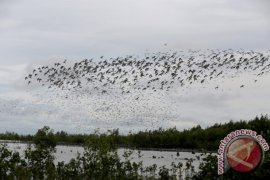 Walhi: burung Siberia tidak akan mampir lagi ke TN Sembilang