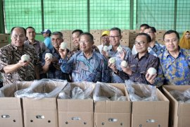 Darmin Nasution: Pisang Mas Lampung Jadi Contoh Peningkatan Ekspor