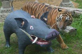 Pelatihan kemampuan berburu harimau