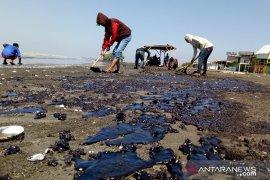 Tambak garam di Karawang hentikan produksi akibat kebocoran minyak mentah
