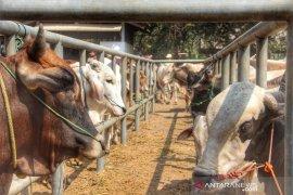 Purwakarta sebar petugas kesehatan hewan jelang Idul Adha