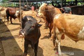 Jelang Idul Adha pasar hewan mulai ramai