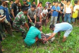Karyawan kebun Langkat tewas tersengat arus listrik tegangan tinggi