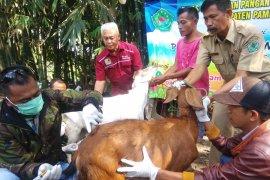 Petugas DKPP Pamekasan periksa kesehatan hewan kurban