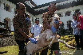 Sosialisasi Pemeriksaan Kesehatan hewan Kurban