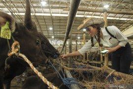 Pemkot Depok larang penjualan hewan kurban di pinggir jalan