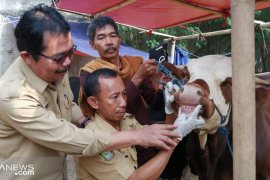 DKP Tangerang bentuk satgas awasi penjualan hewan kurban sakit