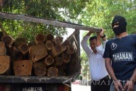 Polres dan KPH Ngawi tangkap pencuri kayu jati