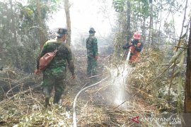 Kebakaran hutan di Riau akibat pembakaran lahan gambut disengaja