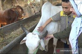 Penjualan hewan kurban di Sukabumi diawasi ketat hindari pedagang curang