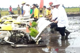 Pemanfaatan 7.968 ha lahan sawah di Bangka Selatan terkendala irigasi