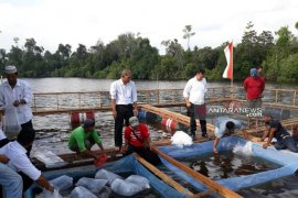 Pemkab Bangka Selatan salurkan 140 ribu bibit ikan air tawar