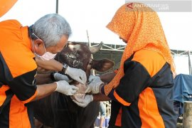Pemkab Gresik terjunkan tim dokter periksa hewan kurban