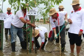 Pemprov Malut fokus tanam pohon mangrove
