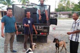 Polisi tembak pencuri ternak di Nagan Raya