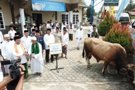 Gubernur serahkan sapi kurban Presiden berbobot 850 kilogram ke masyarakat