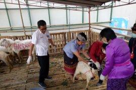 Distan Denpasar imbau masyarakat periksakan kesehatan hewan kurban