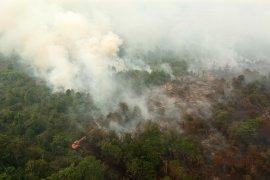Lahan gambut di Jambi masih menyimpan bara api, sewaktu-waktu bisa terbakar