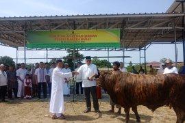Polres Bangka Barat bantu sapi kurban ke Masjid Jamik