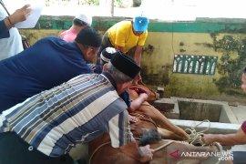 Tahun ini, Masjid Agung Singkawang sembelih 30 ekor hewan kurban