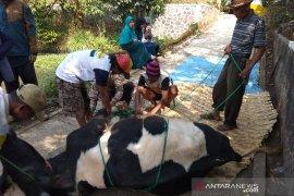 Petugas kesehatan hewan memeriksa daging kurban di Garut