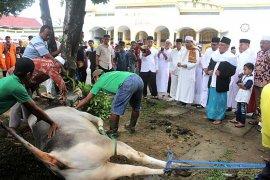 Pemotongan hewan kurban di masjid Alfatah berlangsung tiga hari