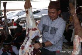 Pemkab Bangka kurban 11 ekor sapi pada perayaan Idul Adha