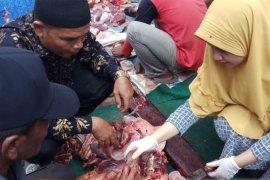 Petugas temukan cacing pada hati sapi kurban di Putussibau